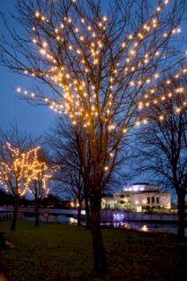 Christmas in Ireland: a tree hung with golden lights in Lisburn.