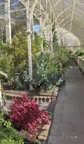 Inside Botanic Gardens Dublin