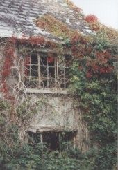 Ivy-clad ruin, Slyguff, Co Carlow.