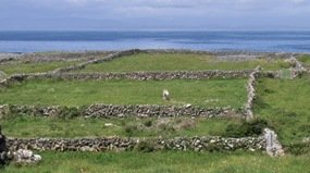Stone walls on Inishmore/Inis Mór.