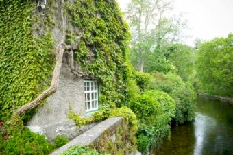 Ivy clad cottage in Mayo, Ireland.