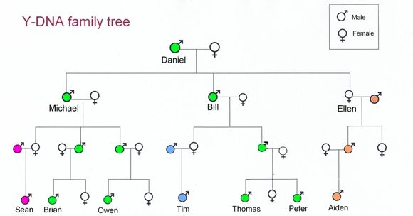 y-dna diagram